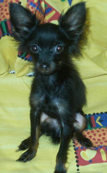 http://toy-terrier.narod.ru/aladdin/01.jpg